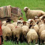 Tribus nomadas en Iran, tour de 15 días